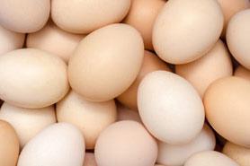 proteine dieet krachttraining